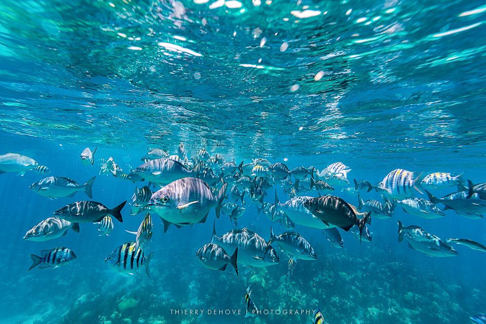 Ocean Underwater Images with AquaTech