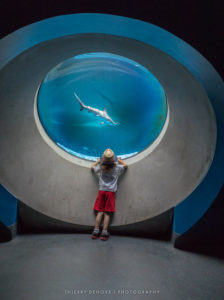Phillip and Patricia Frost Museum of Science for Family Fun Guide Miami 2017